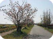 大木しょうふくえんイメージ1